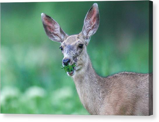 Weed Deer Canvas Print