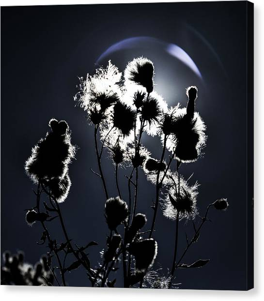 Weed Silhouette Canvas Print