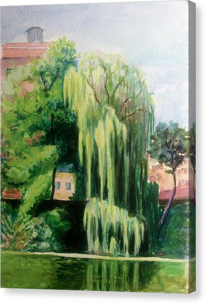 Weeping Willow At North Pond Canvas Print