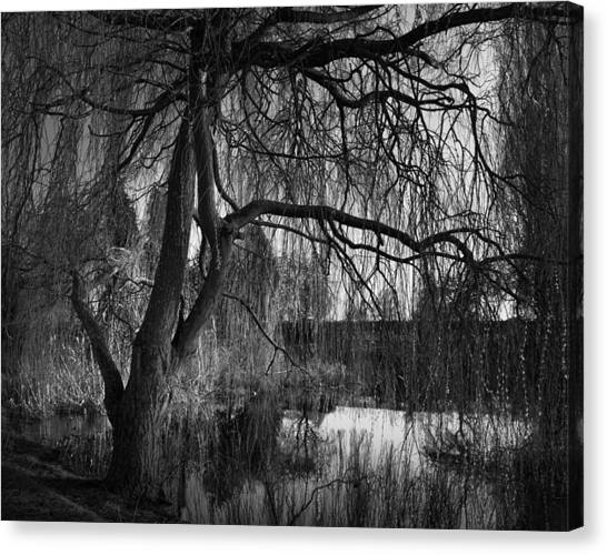 Weeping Willows Canvas Print - Weeping Willow Tree by Ian Barber