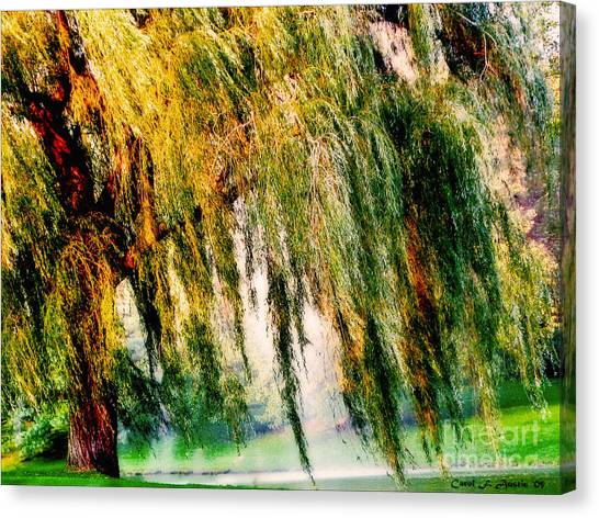 Weeping Willows Canvas Print - Weeping Willow Tree Meditation Wall Art Print  by Carol F Austin