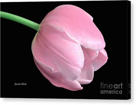 Welcome Spring In Pink Canvas Print