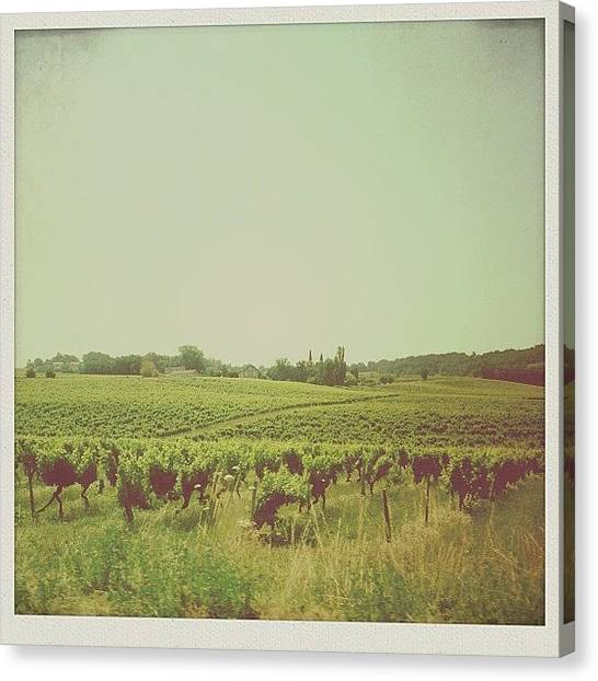Vineyard Canvas Print - Welcome To The South West by Candace Fowler
