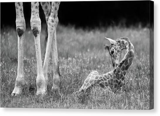 Camouflage Canvas Print - Well Protected II by Andreas Feldtkeller