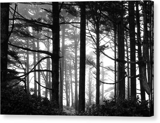 West Coast Trees Canvas Print
