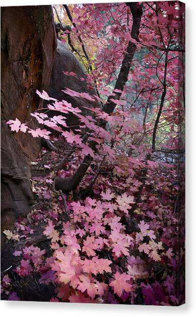 West Fork Fall Colors Canvas Print