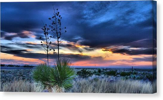 West Texas Yuccas Canvas Print