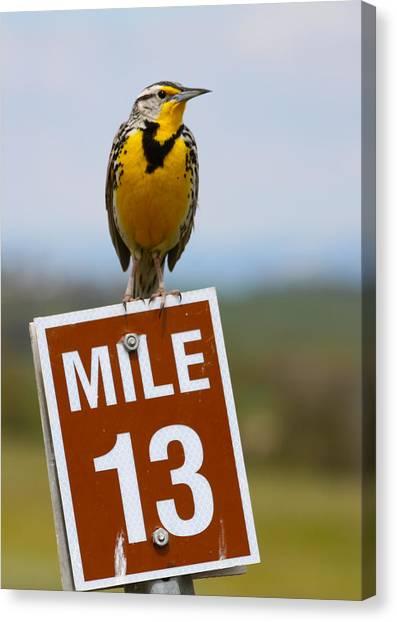 Meadowlarks Canvas Print - Western Meadowlark On The Mile 13 Sign by Karon Melillo DeVega