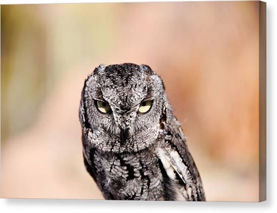 Western Screech Owl Canvas Print