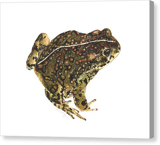 Western Toad Canvas Print