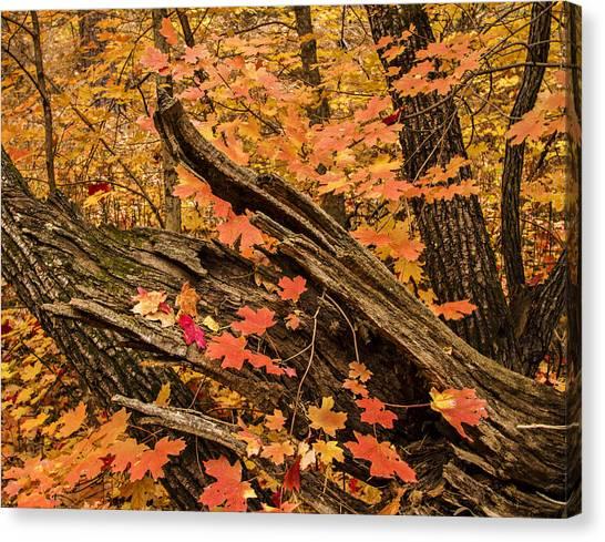 Westfork Foilage Canvas Print