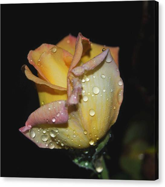 Canvas Print featuring the photograph Wet And Wonderful by Judy Hall-Folde