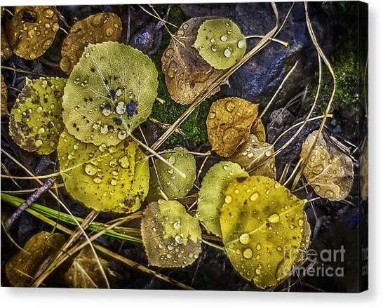 Wet Aspen Floor Canvas Print