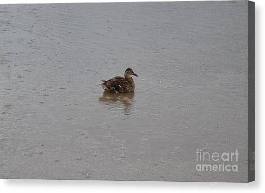 Canvas Print featuring the photograph Wet Duck by Scott Lyons