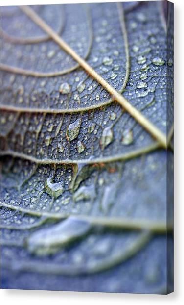 Wet Leaf Canvas Print by Frank Tschakert