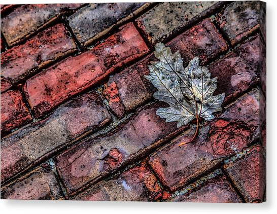 Wet Leaf Road Canvas Print
