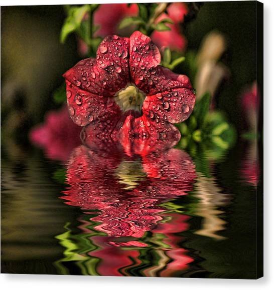 Wet Petunia Canvas Print