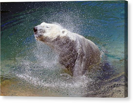 Wet Polar Bear Canvas Print