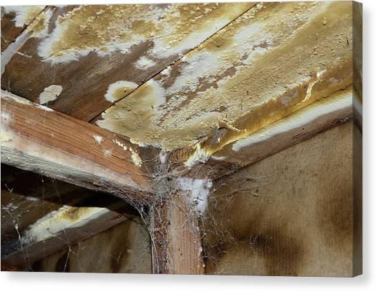 Cellar Canvas Print - Wet Rot by Cordelia Molloy