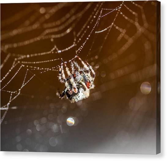 Spider Web Canvas Print - Wet Silk by Aaron Aldrich