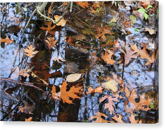 Wetland Reflections 12 Canvas Print by Mary Bedy