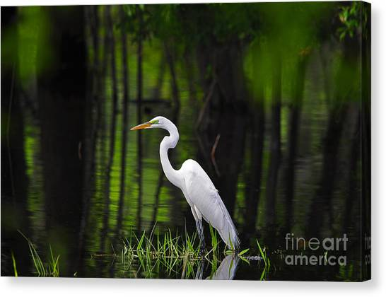 Wetland Wader Canvas Print