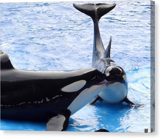 Whale Kiss Canvas Print