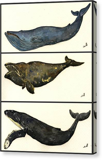 Rights Canvas Print - Whales Compilation 1 by Juan  Bosco
