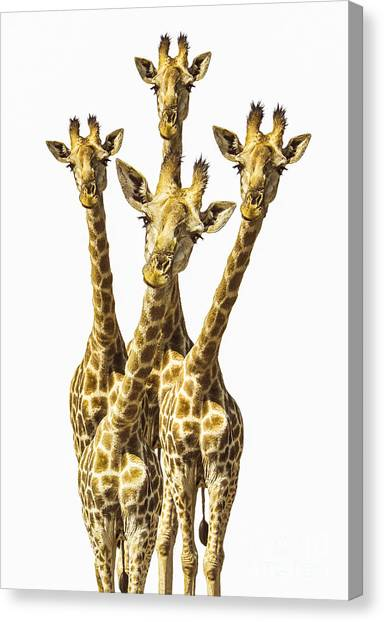 Animal Canvas Print - What Are You Looking At? by Diane Diederich