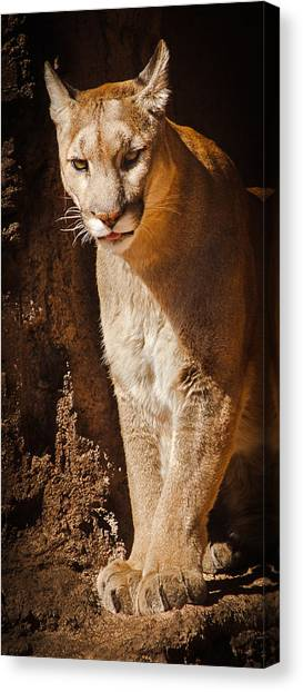What Big Paws Canvas Print