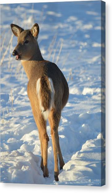What Do You Think This Deer Is Saying? Canvas Print