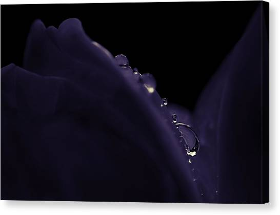 What Lies Beneath Canvas Print