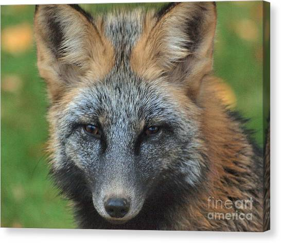 What The Fox Said Canvas Print