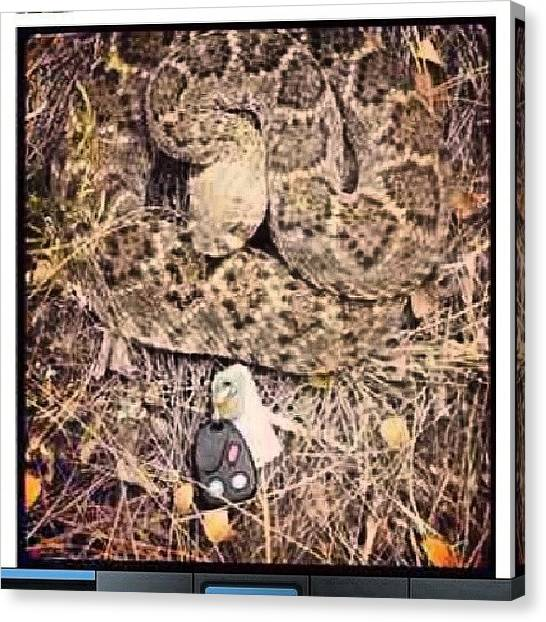 Rattlesnakes Canvas Print - What Would You Do? #keys #snake by Brandon Fisher