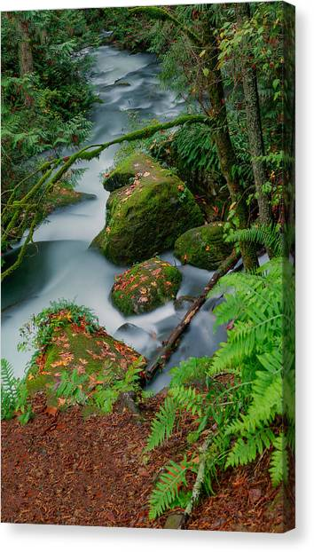 Whatcom Falls 1 Canvas Print