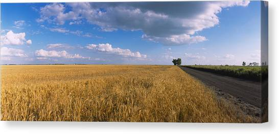 North Dakota Canvas Print - Wheat Crop In A Field, North Dakota, Usa by Panoramic Images