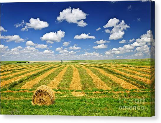 Saskatchewan Canvas Print - Wheat Farm Field And Hay Bales At Harvest In Saskatchewan by Elena Elisseeva