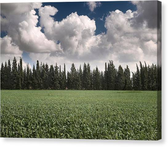 Wheat Field And Clouds Canvas Print