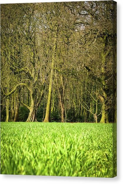 Nottinghamshire Canvas Print - Wheat Field by Nuzulu