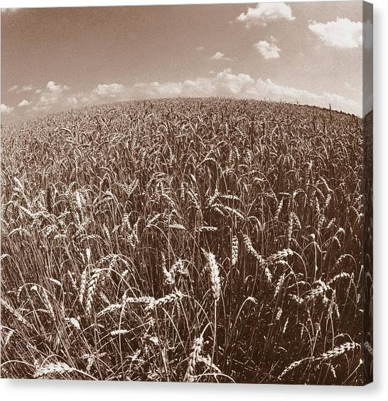 Wheat Fields Forever Canvas Print
