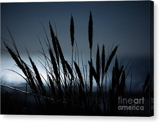 Wheat Stalks On A Dune At Moonlight Canvas Print