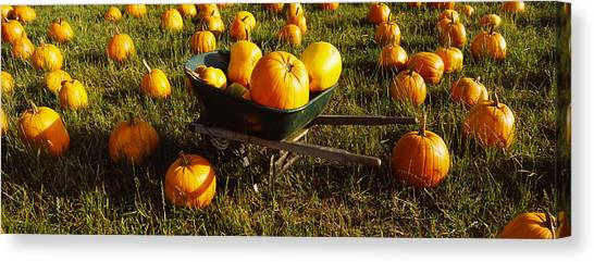 Pumpkin Patch Canvas Print - Wheelbarrow In Pumpkin Patch, Half Moon by Panoramic Images