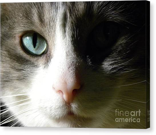 When I Look In Your Eyes.... Canvas Print by Laura Yamada