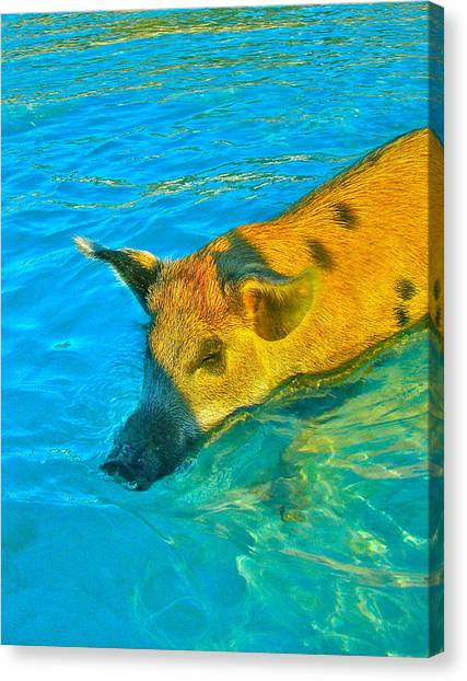 When Pigs Swim Canvas Print