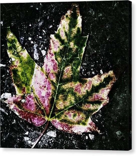 Autumn Leaves Canvas Print - when Summer Fades To Silence, When by Vanessa Leblanc