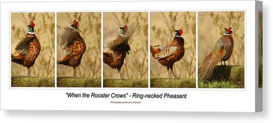 When The Rooster Crows Canvas Print