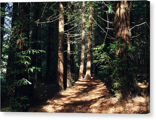 Redwood Forest Canvas Print - When You See The Light by Laurie Search