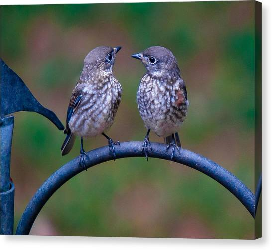 Canvas Print featuring the photograph When's Dad Coming Back? by Robert L Jackson