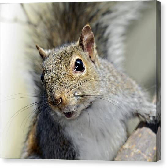 Where Are The Nuts Canvas Print