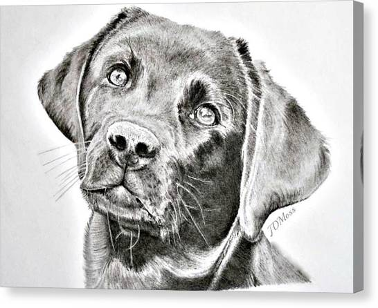 Where Is My Bone Canvas Print by Janet Moss